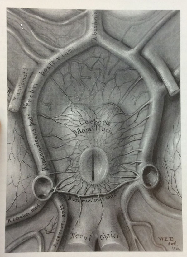 Drawing made by Dandy illustrating the blood supply of the pituitary gland. Of historical note, this was a project given to Dandy by Harvey Cushing.